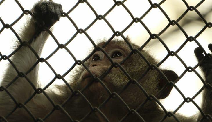 World Animal Protection: 'Bali hel voor dieren in toeristische industrie'