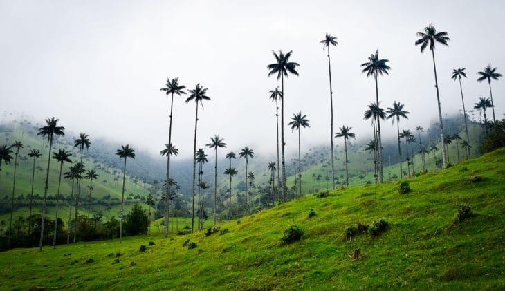 BCD verstevigt positie in Colombia