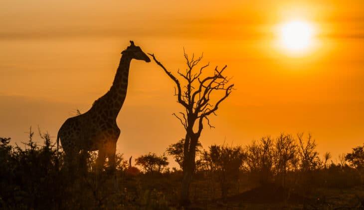 Zuid-Afrika opent grenzen voor internationale reizigers